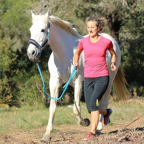 Horse exercising